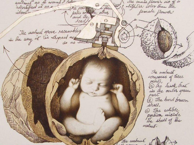 in a nutshell, walnut sculpture, sara khan, miniature sculpture, akhrot, walnut